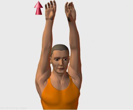 Estiramiento (stretching, streching) recomendado para:  baloncesto,  atletismo,  senderismo,  voleibol,  golf,  balonmano,  kitesurf,  esgrima,  brazos,  silla,  oficina,  pilates,  relajacion de espalda,  vuelo,  trapecio,  deltoides.