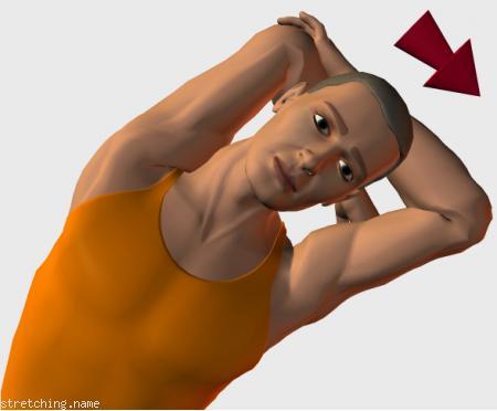 Estiramiento (stretching, streching) recomendado para:  futbol,  baloncesto,  atletismo,  senderismo,  windsurf,  snowboard,  surf,  escalada,  kayak,  squash,  natacion,  golf,  tenis,  esqui,  triatlon,  artes Marciales,  balonmano,  boxeo,  kitesurf,  padel,  esgrima,  hockey,  espalda,  dormir,  silla,  oficina,  triceps,  intercostales.