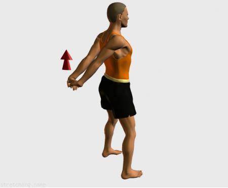 Estiramiento (stretching, streching) recomendado para:  atletismo,  senderismo,  snowboard,  surf,  natacion,  esqui,  correr,  beisbol,  softbol,  boxeo,  esgrima,  brazos.